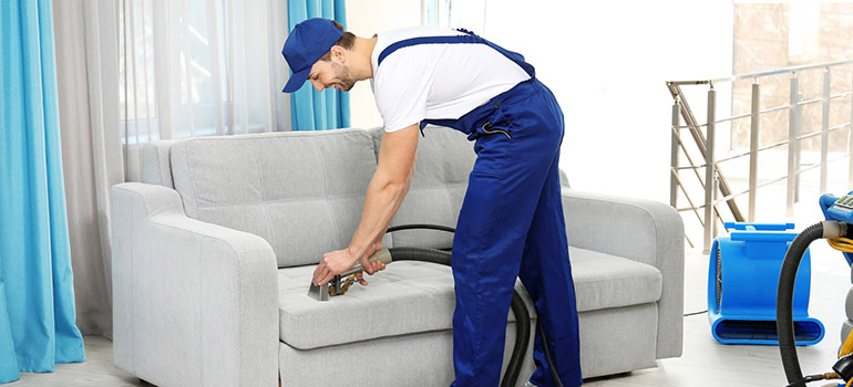 Professional sofa cleaning technician cleaning a gray sofa